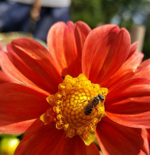 Barret_bees_02-18