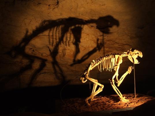 Thylacoleo_skeleton_in_Naracoorte_Caves